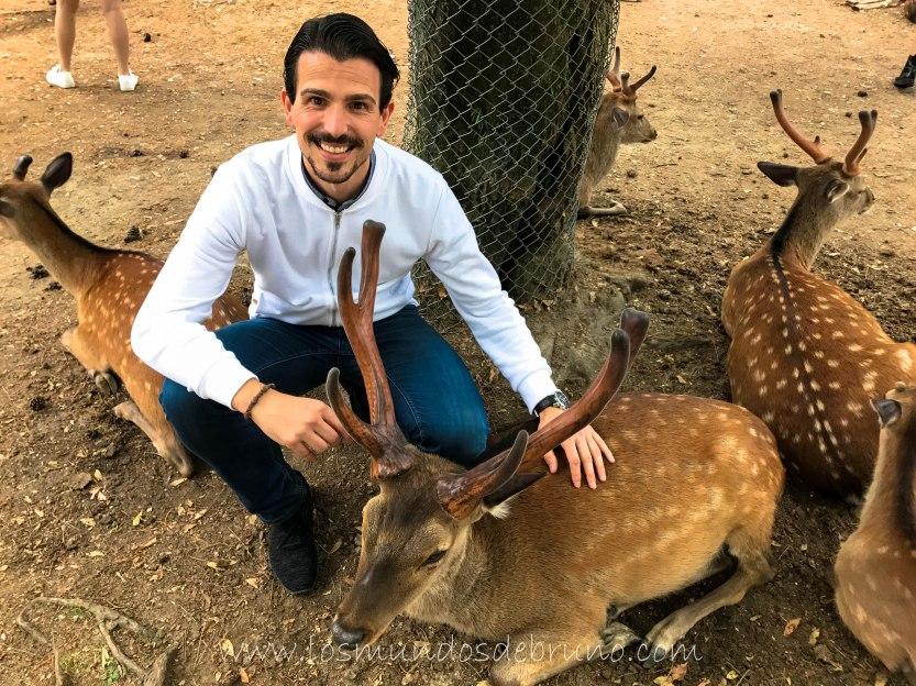 Nara Holy Deer